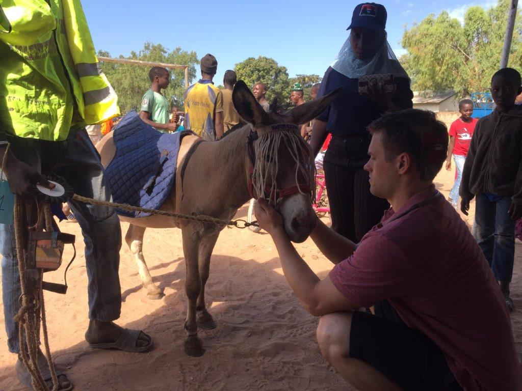Paul Martynski shares his experience of working at The Gambia Horse and Donkey Trust with the BEVA Trust