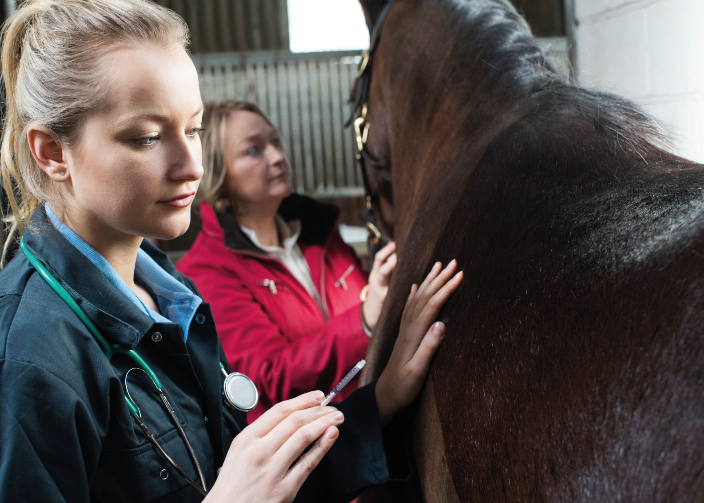 RCVS Council approves new Equine Emergency Services Clinic Practice Standards Scheme Accreditation