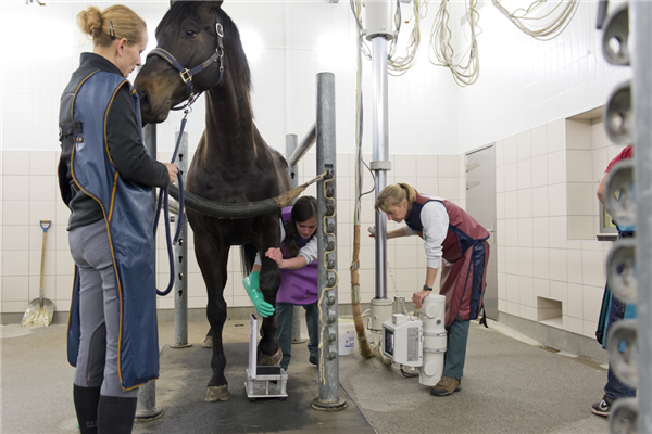Happy to be working in equine practice?