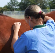 Equine vets encouraged to be on heightened look out for potential flu cases