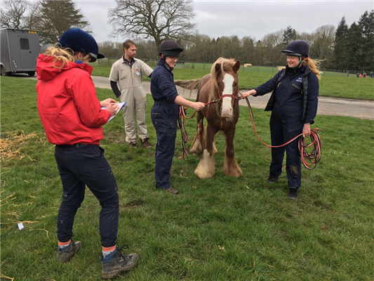 65 horses attended the April 2018 BEVA Trust Education and Welfare Clinic
