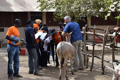 BEVA Trust visits the Gambian Horse and Donkey Trust