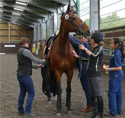 Leading education journal publishes results of horse and rider weight ratio study