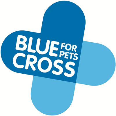 Blue Cross teams up with Mary King to teach young people about horse welfare