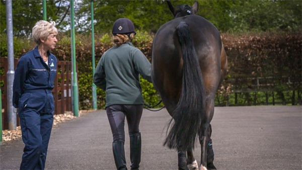Learn how to apply new observation skills when assessing horses, with new online course