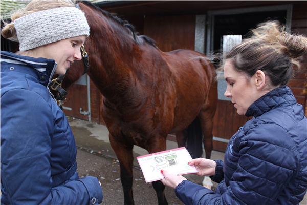 BEVA launches colour-code scheme to tackle equine obesity