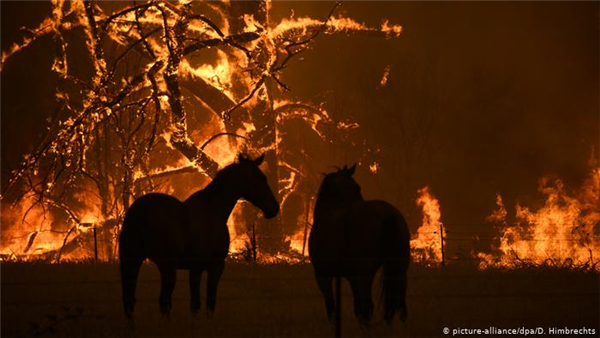 BSAVA and BEVA donate £7,000 to support Australian wildfire veterinary care
