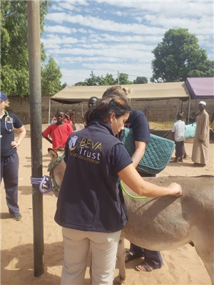 BEVA Trust volunteers make a difference to working animals in the Gambia