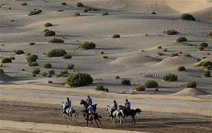 Endurance racing in UAE brought to halt as FEI seeks assurances about horse protection