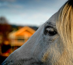Vet caught up in fraudulent horse sales case