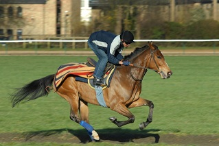 Fitbit for Racehorses!