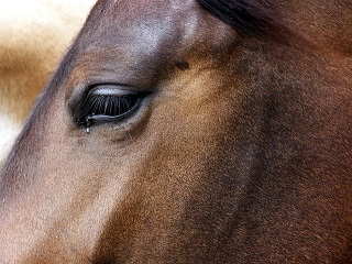 Can horses communicate with us?