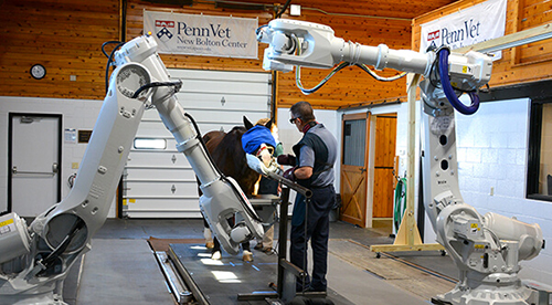 Penn Vet's New Bolton Center Launches Revolutionary Robotics-Controlled Equine Imaging System