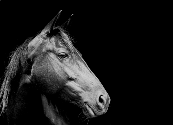 Industry and Government Work Together to Implement New Protocol for Control of Contagious Equine Metritis (CEM) in Great Britain